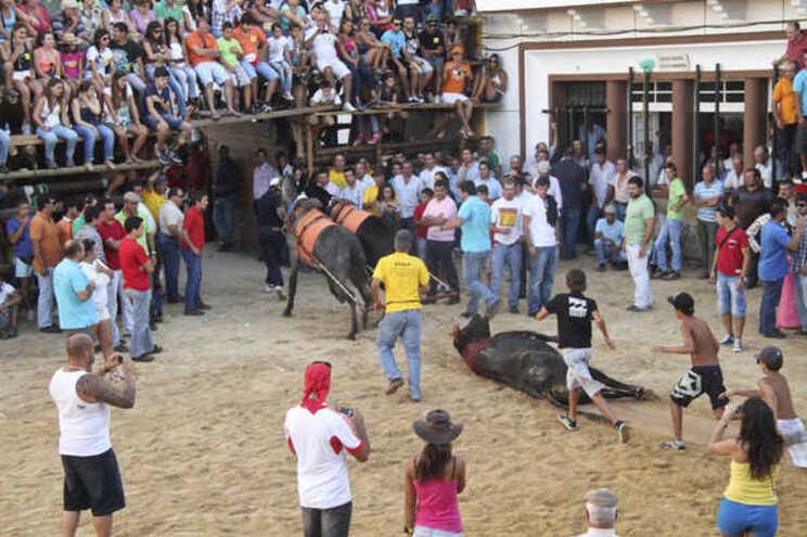 """""""Moda"""" pelo PAN não entra na terra dos touros de morte"""
