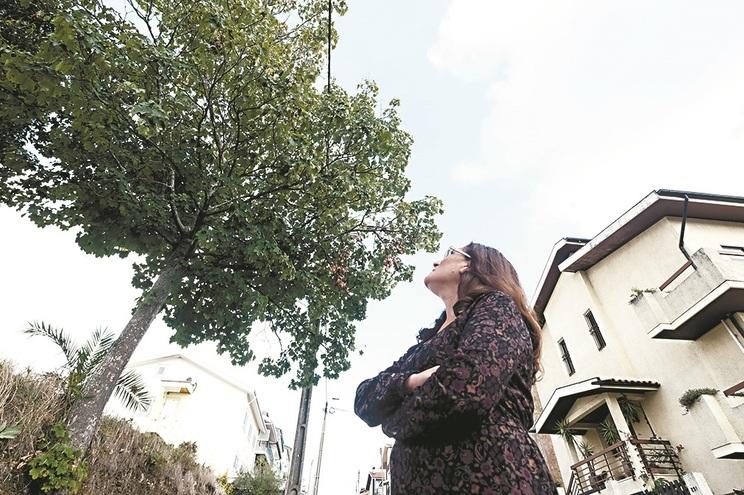 Porto é o distrito mais afetado pelas vespas-asiáticas