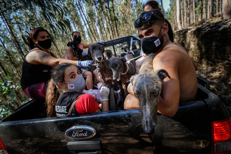 Populares e associações de animais salvaram animais após um incêndio em Agrela, Santo Tirso