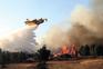 Planos municipais de defesa contra incêndios não protegem floresta
