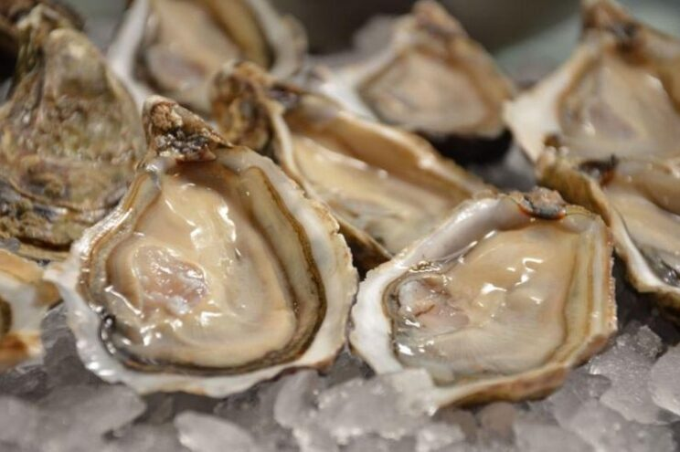 Apreendidos 720 quilos de ostras que podiam ter toxinas no Algarve