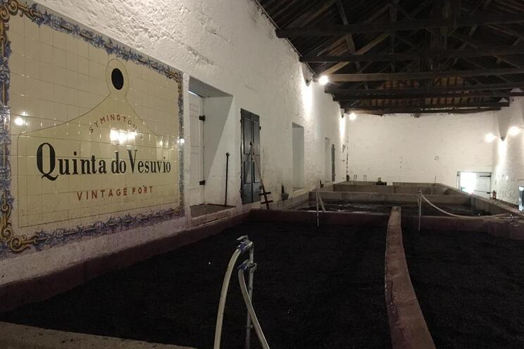A pisa da uva no Douro
