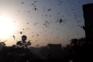 Gafanhotos do deserto destroem 50 mil hectares de plantações na Índia