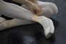 Escolas não profissionais de dança têm de encerrar durante confinamento