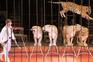 Governo  deixa  animais  de circo  no limbo