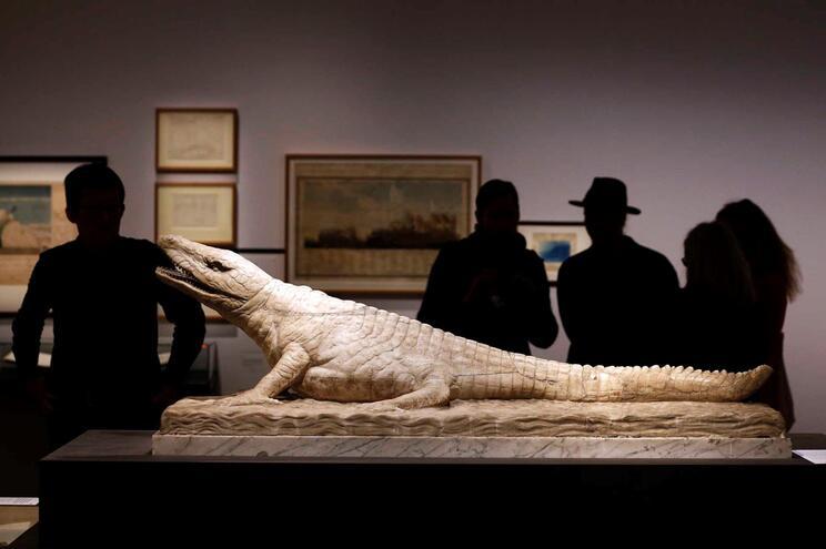 Escultura de crocodilo em exposição na Alemanha
