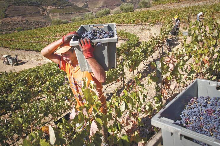 Produção e qualidade dos vinhos do Douro sobem em 2019