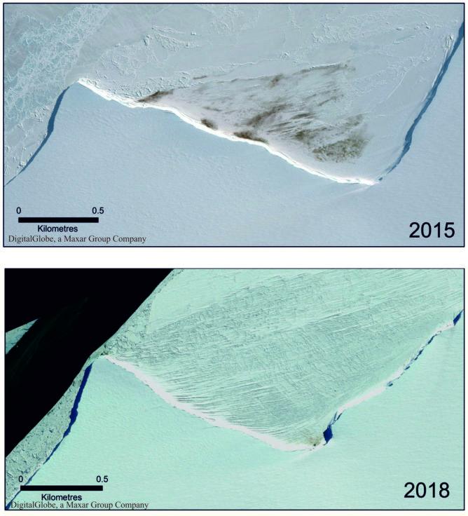 A segunda maior colónia de pinguins do mundo está a desaparecer