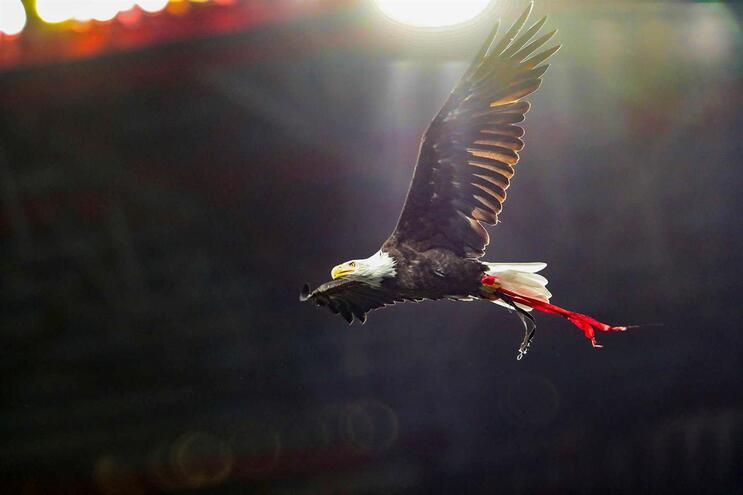 "SAD do Benfica reafirma ""licitude dos seus atos e comportamentos"""