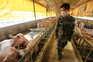 Este novo vírus foi detetado em trabalhadores na China