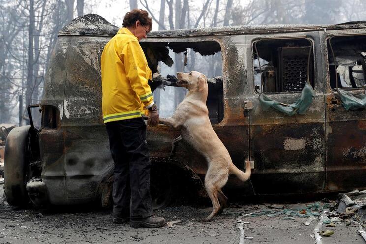 Mulher procura desaparecidos com o seu cão, em Paradise, Califórnia