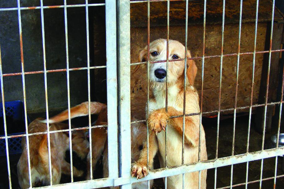 Resultado de imagem para Abate de animais nos canis é proibido a partir de domingo