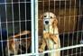 Abate de animais nos canis é proibido a partir de domingo