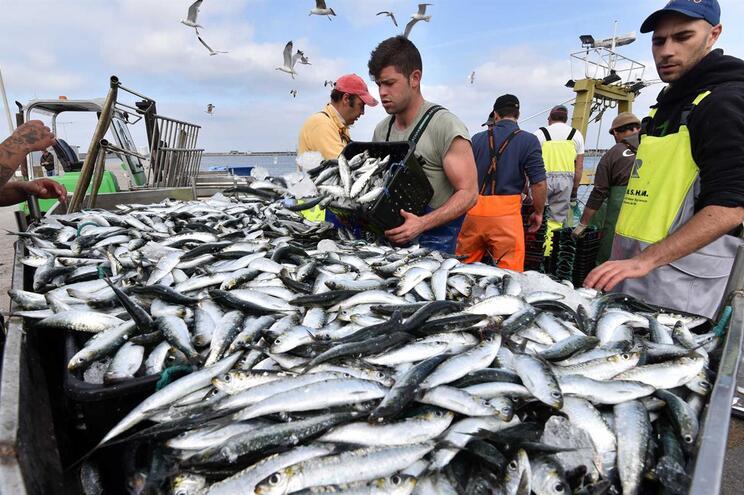 Pescadores mais preocupados com apoios para renovar frota do que com cortes