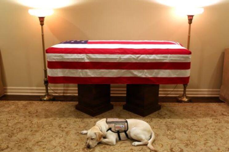 Cão de Bush deitado ao lado do caixão emociona a Internet