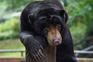 Milhares de animais em risco de passar fome nos zoológicos da Indonésia