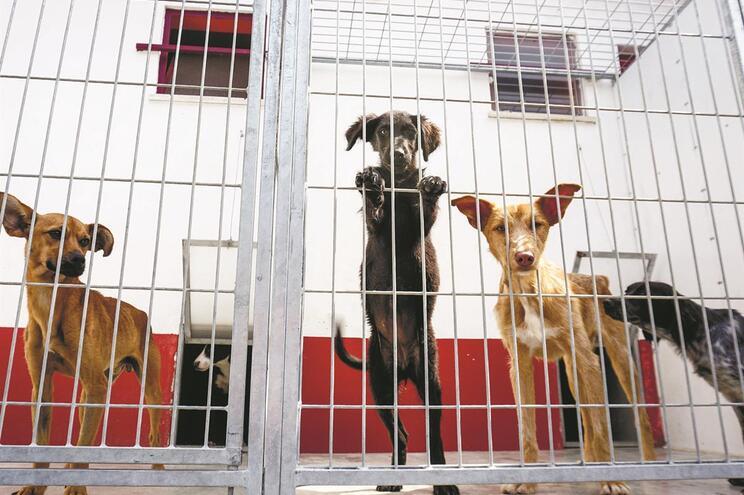 Canis abateram um terço dos animais recolhidos