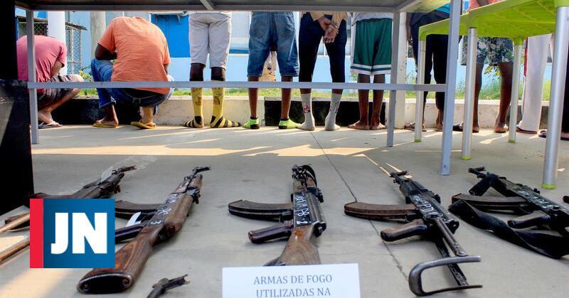 Polícia apreende 700 quilos de marfim e de escamas de pangolim