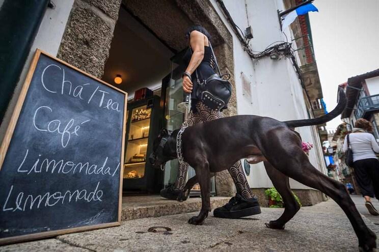Lei permite a entrada de animais em restaurantes e outros estabelecimentos devidamente sinalizados