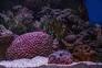Metade da Grande Barreira do Coral morreram em anos anteriores