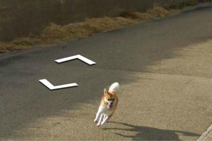 Cão persegue carro do Google Maps e aparece em todas as imagens