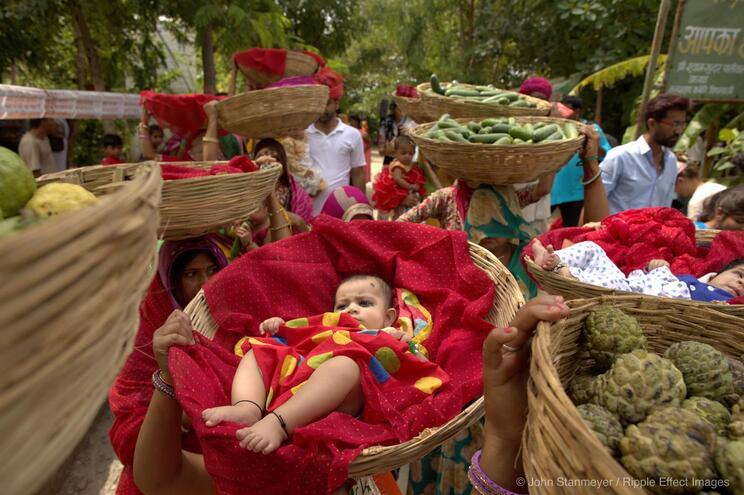 Por cada menina, 111 árvores: Piplantri na Índia é uma comunidade modelo