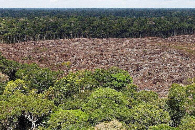 Governadores de estados brasileiros da Amazónia criticam política de Bolsonaro