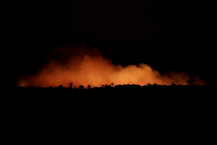 Infografia: Os incêndios na floresta amazónica