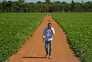 Plantanção de soja no estado do Mato Grosso