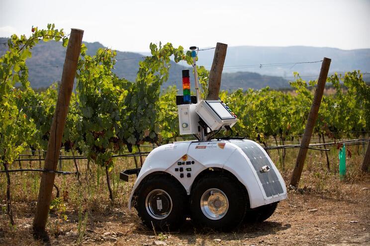 O robô VineScout