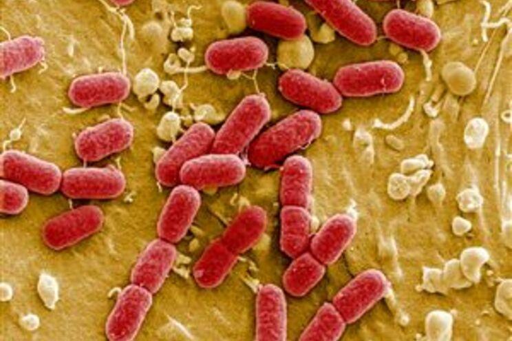 Imagem da bactéria E.coli