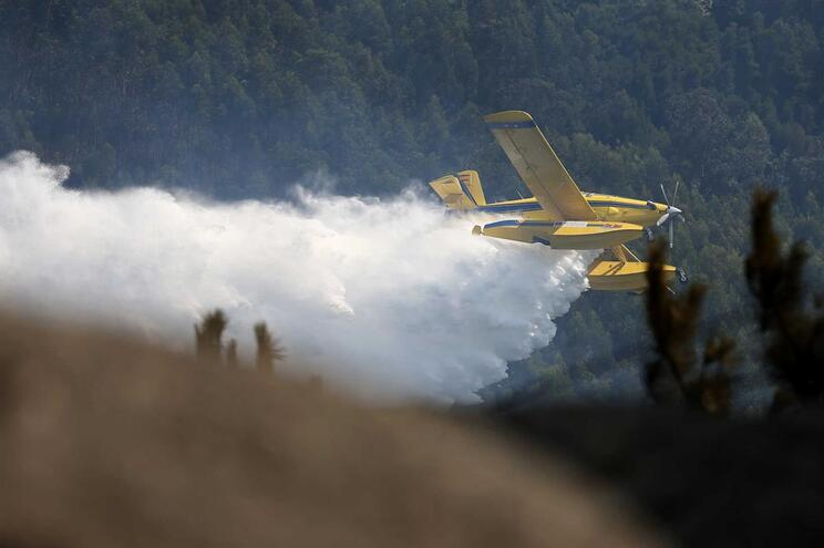 Observatório JN. Incêndios florestais: a causa das causas
