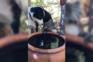 Cão partilha água com coala sedento na Austrália