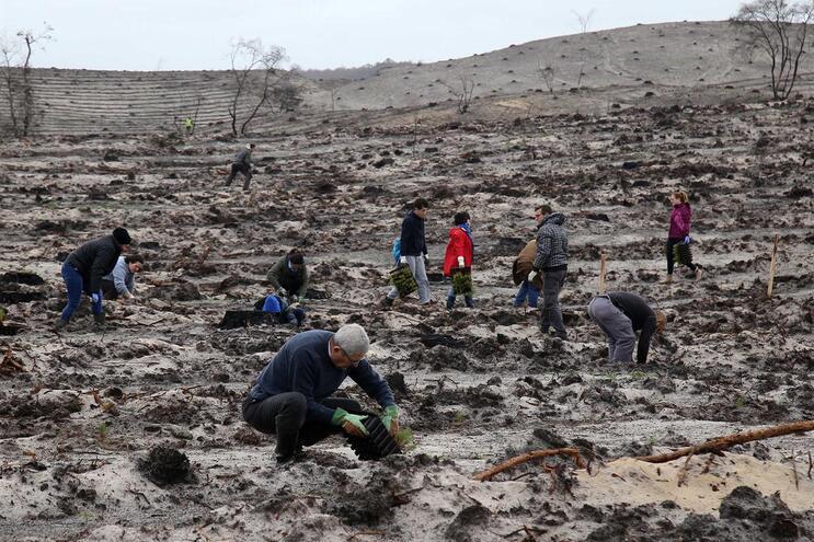 Cinco clubes rotários plantaram 50 mil árvores na Mata Nacional de Leiria, no início de março