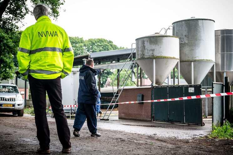Países Baixos abatem milhares de martas por causa do novo ...