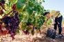 Lagoa aproveita Dia do Enoturismo para lançar Wine Experiences