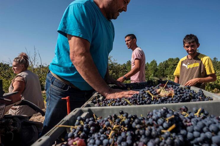 Todas as regiões do país produzem mais e melhor vinho