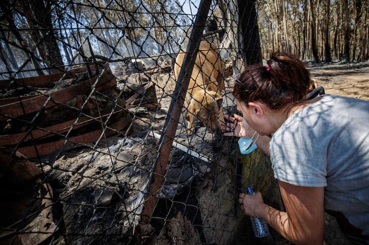 110 cães foram retirados do abrigo com vida