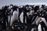 Ilha da Geórgia do Sul é um refúgio para milhares de pinguins