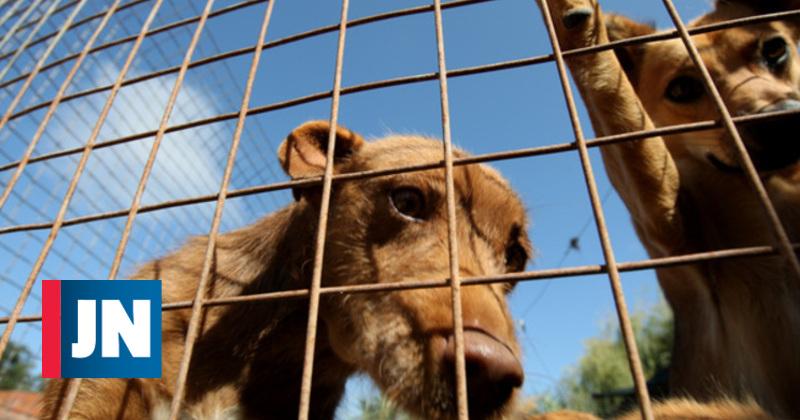 Associação quer que cães errantes sejam devolvidos à origem após esterilização