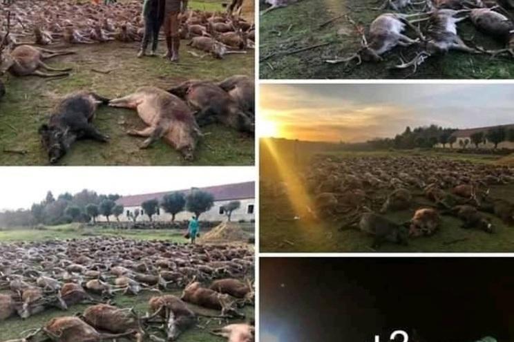 Imagens foram divulgadas no Facebook