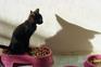 Poluição, ração e os nossos gatos: a pegada ambiental da alimentação animal
