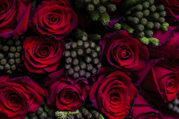 Gaia: celebrar a vida com flores na nova loja da Bloom