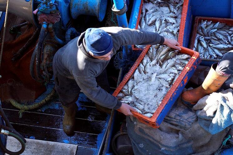 """Organizações da Pesca """"chumbam"""" plano de ordenamento do espaço marítimo"""