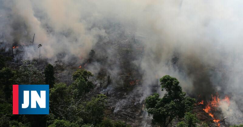 Os incêndios que devoram a Amazónia em 60 segundos