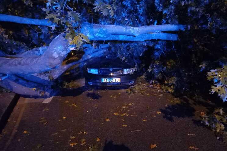 Queda da Árvore no Freixo provocou danos avultados num automóvel que ia a passar