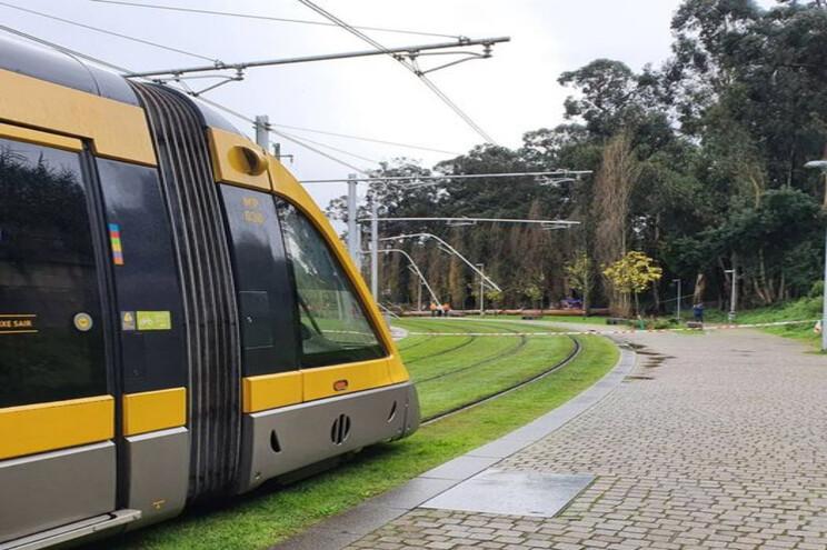 Queda de árvore impediu circulação do metro em Rio Tinto