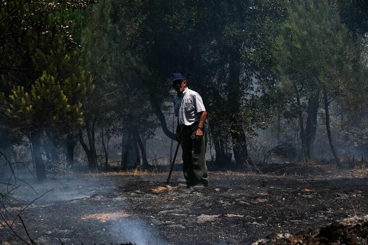 Incêndio de Vila de Rei e Mação consumiu mais de 9500 hectares