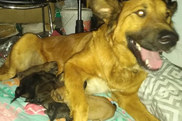 Mulher deita sete cães bebés ao lixo em Lamego