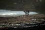 Espécie apareceu em praias das ilhas dos Açores